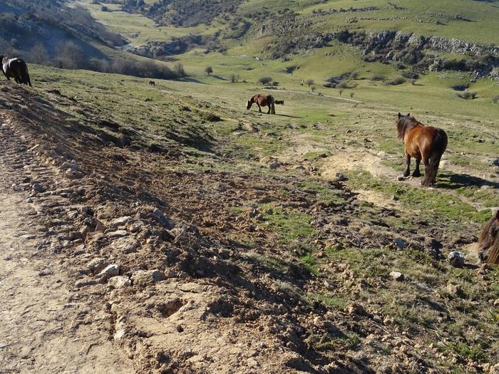 Aralar Natur Parkeko patronatuak bilera egin du, bi urte eta gero