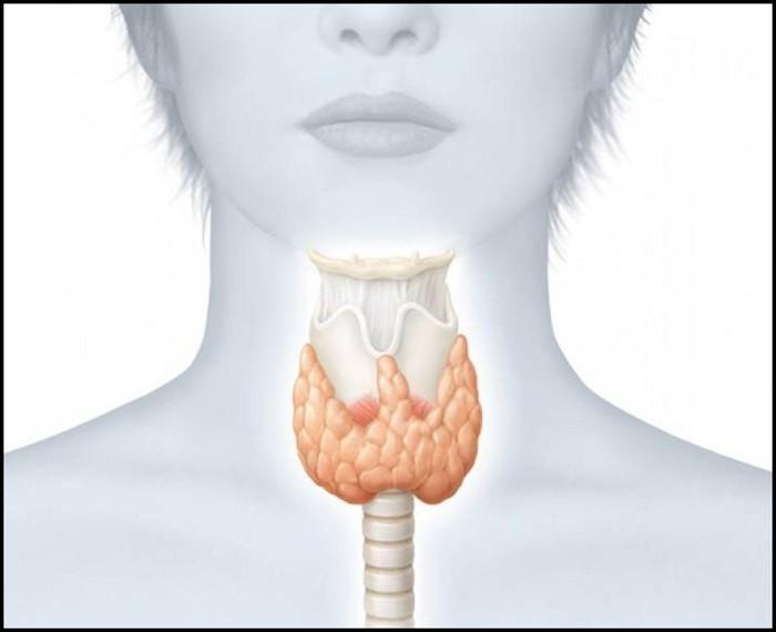Zer dira tiroideak?