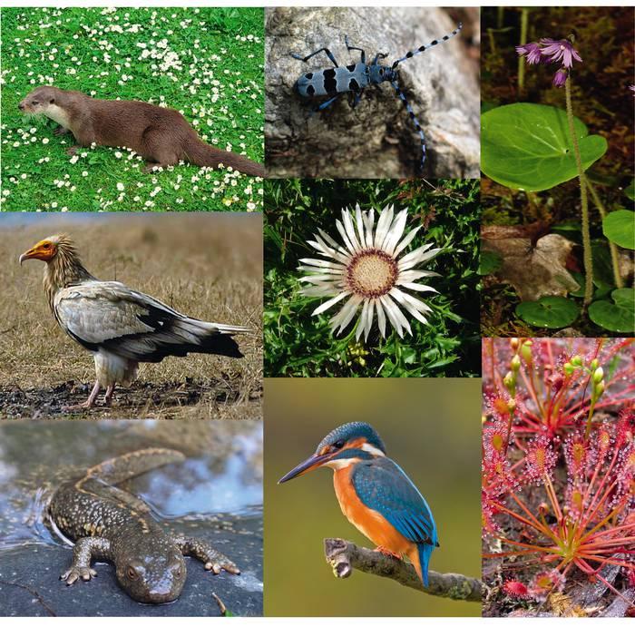 Landare, animalia, mikroorganismo eta ekosistemen aniztasunaren eguna