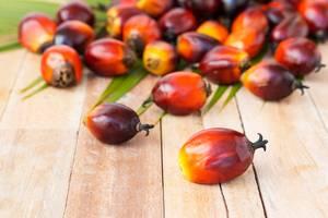 Palma olioa erosketa karrotik ateratzen