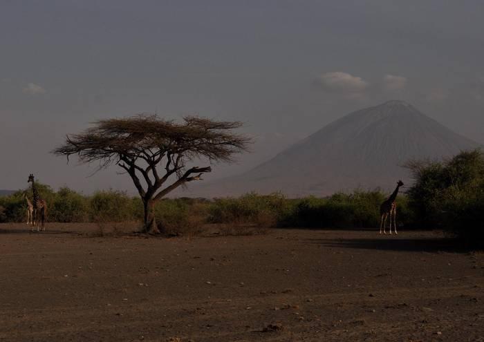 Ol Doinyo Lengai sumendipean jirafak, Tanzanian