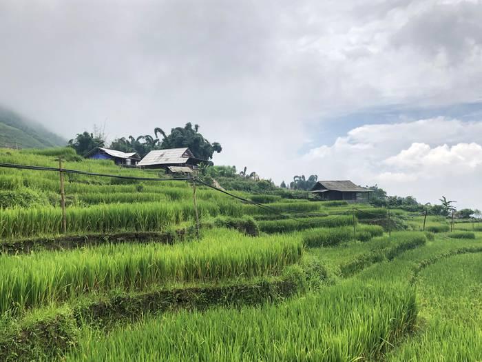 Sapako arrozalak
