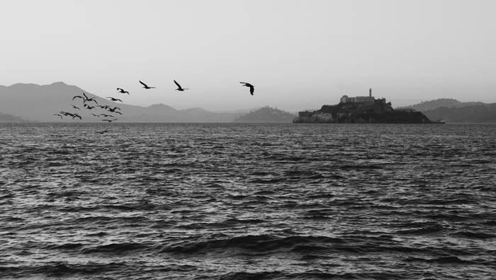 Alcatraz gainean txoriak aske