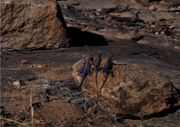 Tanzaniako Serengetin ez da dena handia.